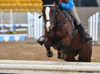 Representing Mangrove Mountain Pony Club, Olivia Johnson will be competing in the Showjumping & Jumping Equitation Championships at Morisset. Photo: Julie Wilson