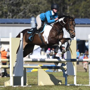 Zone 24 local competitor Alyssa Dryden from Tall Timbers Pony Club took part in the State Showjumping Championships aboard her impressive Pinto, Virtual Reality. Photo: Julie Wilson