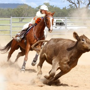 Emily Mills from Moree Pony Club in Zone 8 competed in the State Campdraft Championships. Photo: Paul Smith Photography